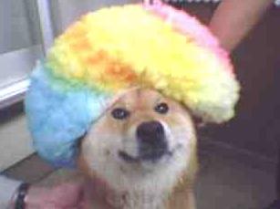 「アフロ犬」の検索結果_-_Yahoo_検索(画像)