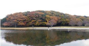 21世紀の森と広場|松戸市